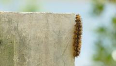Caterpillar walking Stock Footage
