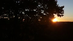Wide shot of Sun setting behind Trees in Silhouette Stock Footage