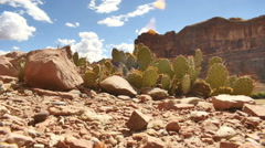 cactus desert dry utah clouds - stock footage