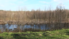 Spring landscape with many trees and picturesque pond Stock Footage