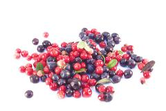 Blueberries and Lingonberries isolated Stock Photos