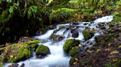 Time Lapse of Long Exposure Rushing White Stream Water and Green Mossy Rocks - stock footage