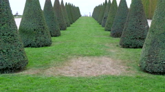 An alley with green grass and cone shaped trees Stock Footage