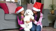 Stock Video Footage of Two Asian Sisters Get Fluffy Puppy For Christmas