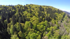 An aerial image over a green and lush forest in the Pacific Northwest. Stock Footage