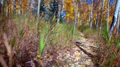 Walking though an Aspen forest, First person point of view. Stock Footage
