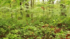 green forest with trees and fern - stock footage