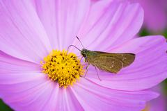 Moth on daisy Stock Photos