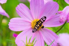 moth on daisy - stock photo
