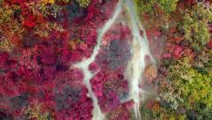 Aerial: top view of colorful autumn forest. Drone moves up. Stock Footage