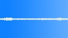 Jungle Crickets 01 - Loop - sound effect
