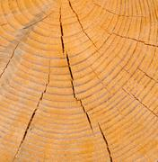 Old pine tree segment with distinct annual rings Stock Photos