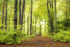 Forest with sun rays - stock photo