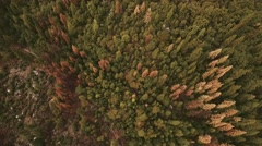Yosemite National Park Aerial of Forest Stock Footage