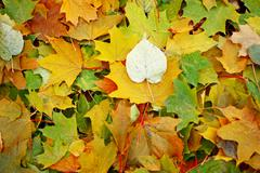 Background of multi-colored leaves. - stock photo