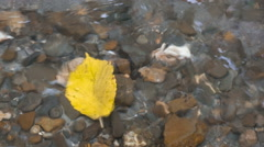 Autumn yellow leaf under water stream Stock Footage