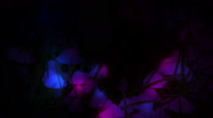 Magic mushrooms grass macro glowing light dark blue purple artistic animation Stock Footage