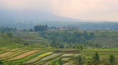 Bali rice terrace jatiluwih paddy field pan.mp4 Stock Footage