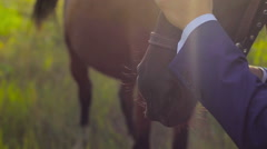 groom stroking his hand over the horse's head outdoors - stock footage