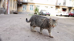 Homeless cats in the yard Stock Footage