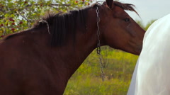 Bride  sitting on a horse  outdoors Stock Footage