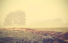 Retro toned foggy autumnal landscape at sunrise. - stock photo