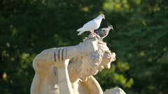 Two birds resting on statue in Warsaw Stock Footage