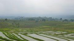 Establishing shot of bali rice terrace jatiluwih cloudy sky.mp4 Stock Footage