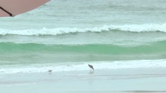 Two birds eating in the water, Seagulls flying by Stock Footage