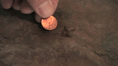 A small dinosaur track is measured by a penny in size comparison Stock Footage