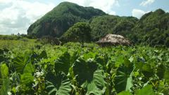 Farmer's hut in the field of plants in Vinales valley Cuba Stock Footage