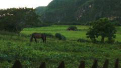 Magnificent view of a horse in fields and hills in Vinales Cuba Stock Footage