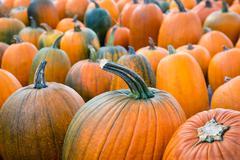 Autumn pumpkins at the pumpkin patch - stock photo