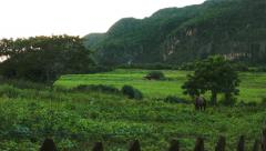 Horse grazing in a beautiful meadow in Vinales valley Cuba Stock Footage