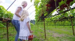 4K Happy mother & daughter picking fruit together in berry orchard. - stock footage