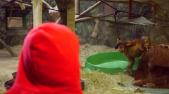 Boy watching a baby orangutan at the zoo Stock Footage