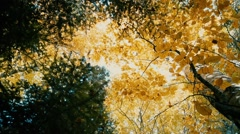 Yellow leaves fall in the beautiful autumn wood in slow motion Stock Footage