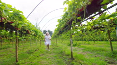 4K Little girl running through berry orchard in the summertime Stock Footage