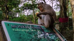 Monkey sitting on a monkey forest sign Stock Footage