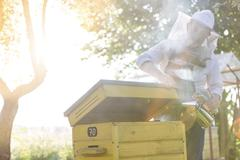 Beekeeper in protective suit using smoker on beehive Stock Photos