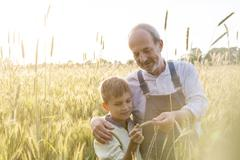 Farmer grandfather and grandson examining rural wheat crop Stock Photos
