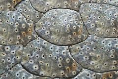 Crocodile skin Stock Illustration