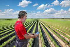 Farmer inspect carrot field Stock Photos