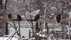 Birds Winter Background Video - stock footage