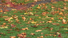 Fall leaves on damp grass Stock Footage