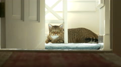 Cat hunting in house Stock Footage