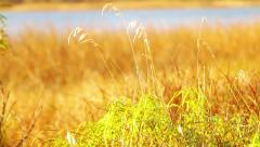 autumn grass swaying - stock footage