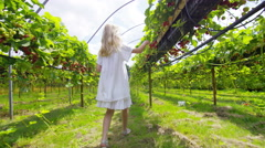 4K Little girl walking through orchard & picking berries in the summertime Stock Footage