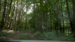 Vehicle driving through a forest Stock Footage