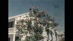 Vintage 16mm film, 1956, Key West, tropical flowers, various Stock Footage